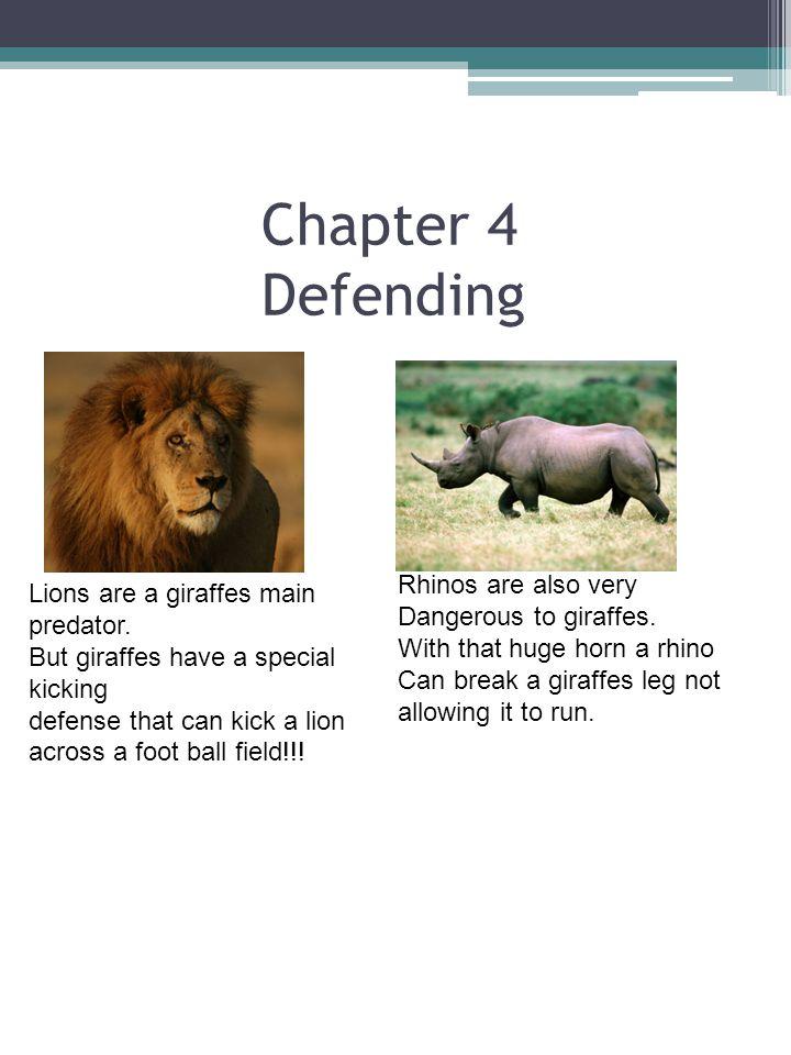 Chapter 4 Defending Lions are a giraffes main predator.