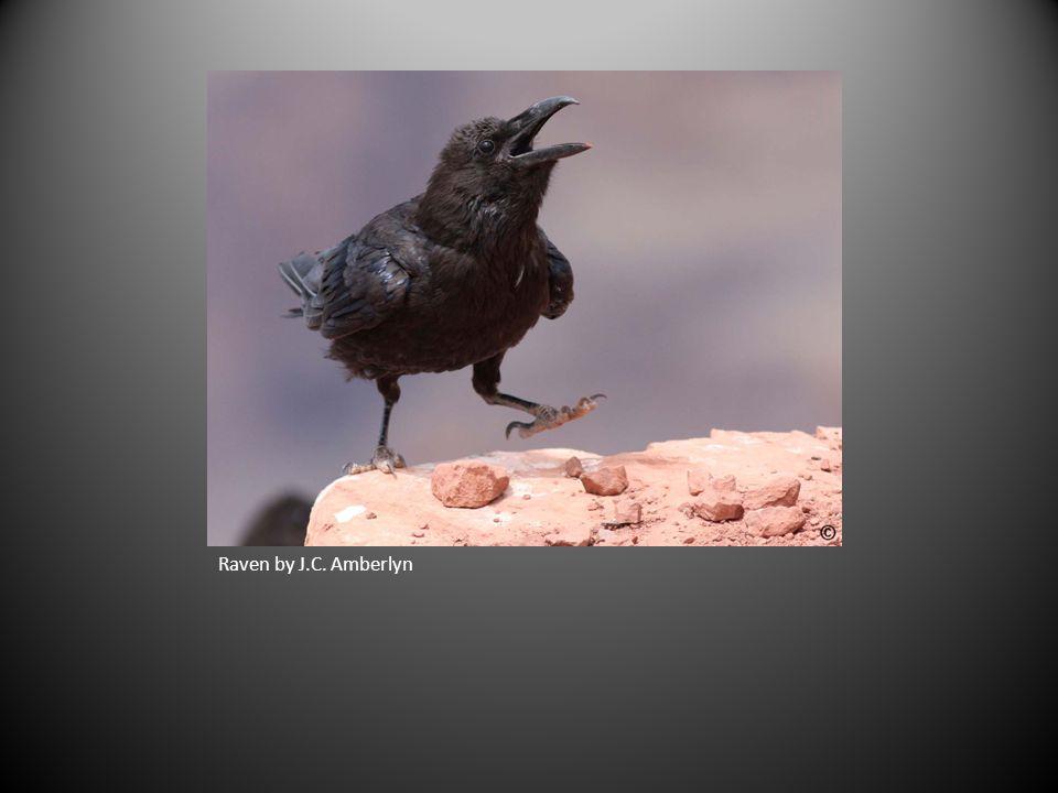 Raven by J.C. Amberlyn