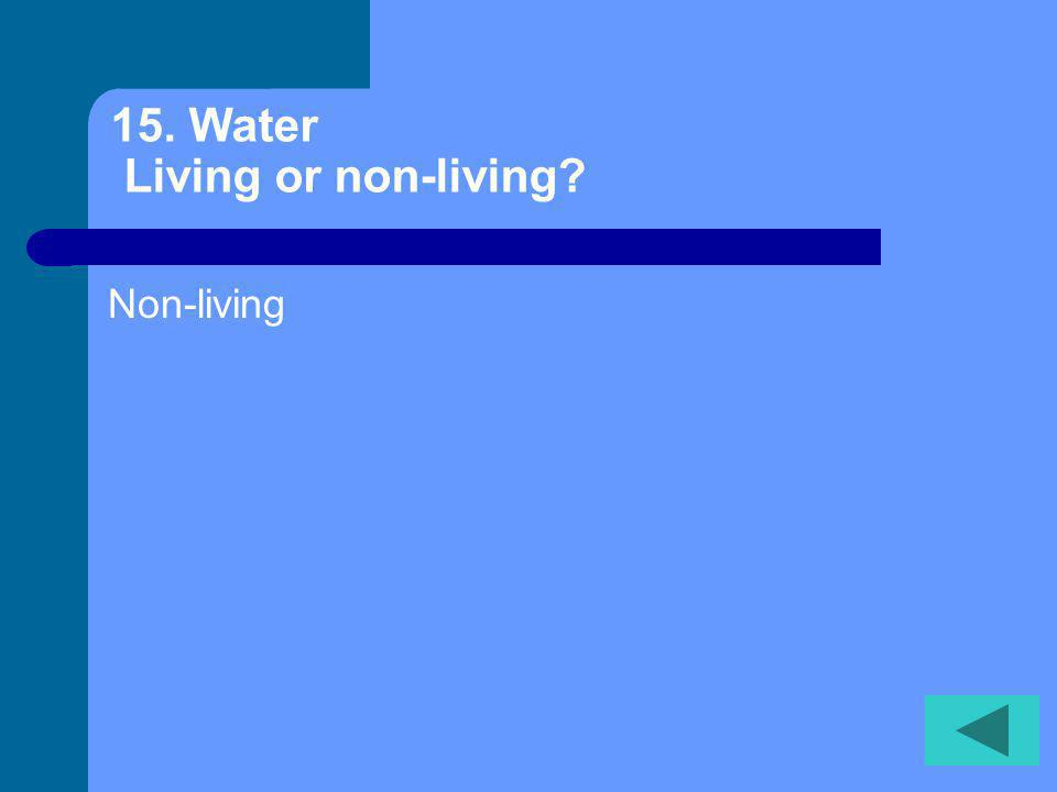 14.Tree… Living or non-living Living