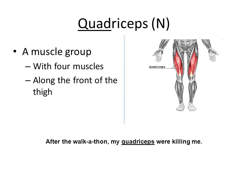 Quadriceps (N) A muscle group – With four muscles – Along the front of the thigh After the walk-a-thon, my quadriceps were killing me.