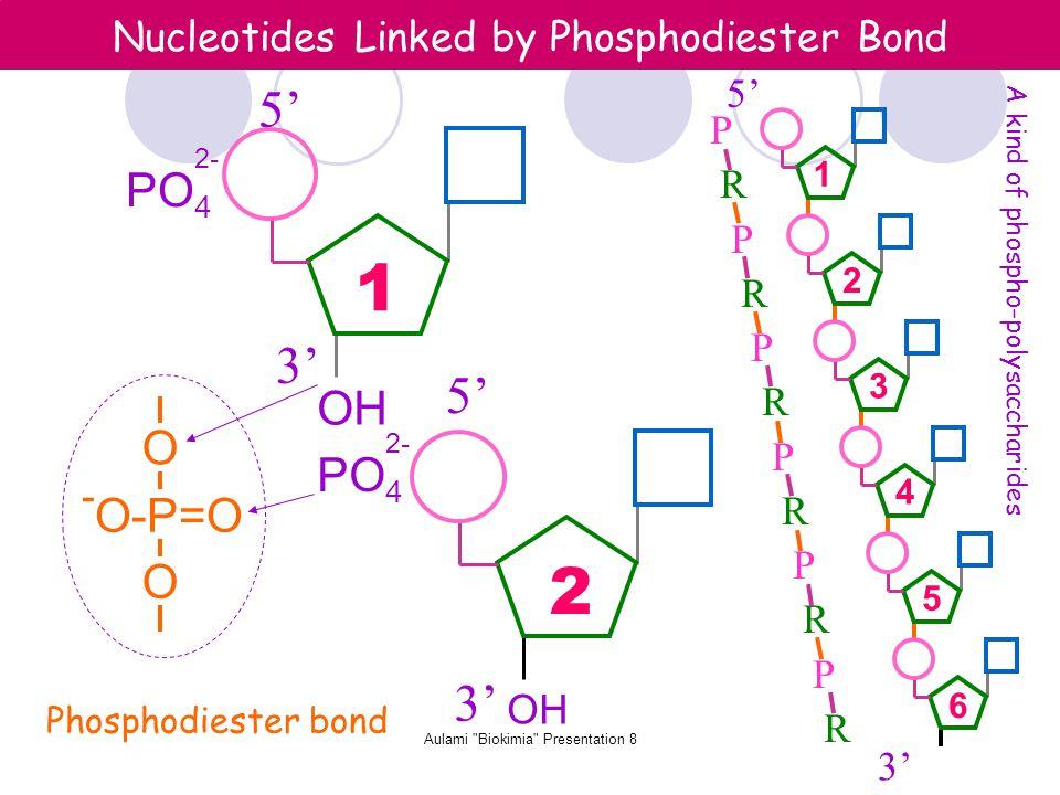 Aulami Biokimia Presentation 8 Nucleotides Linked by Phosphodiester Bond OH PO 4 2- Phosphodiester bond O-P=O - O O 5' 3' PO 4 2- OH 3' 5' P R P R P R P R P R P R 1 2 3' 5' 1 2 3 4 5 6 A kind of phospho-polysaccharides