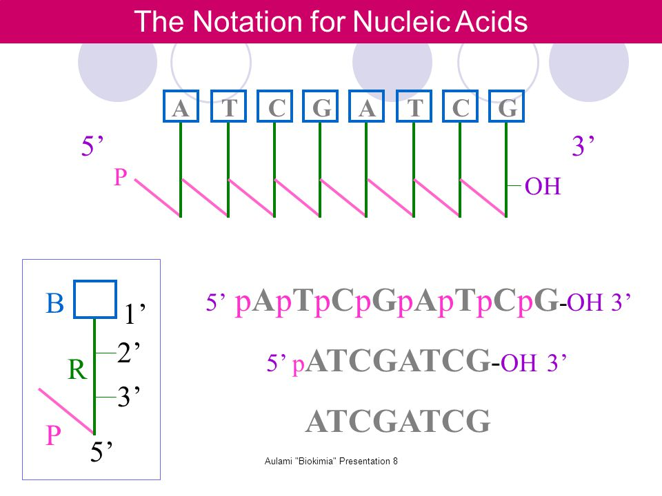 Aulami Biokimia Presentation 8 The Notation for Nucleic Acids P R B 3' 2' 5' 1' ATCGATCG P OH 5'3' 5' pApTpCpGpApTpCpG -OH 3' 5' p ATCGATCG - OH 3' ATCGATCG