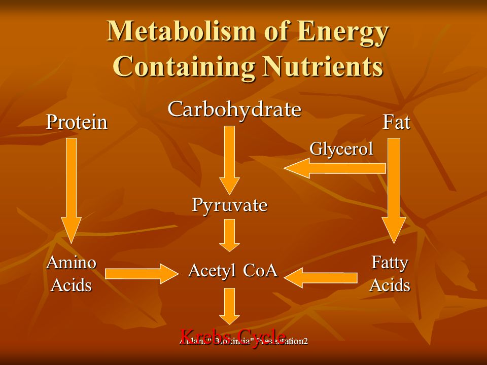 Metabolism of Energy Containing Nutrients CarbohydratePyruvate Acetyl CoA Krebs Cycle Protein Amino Acids Fat Fatty Acids Glycerol