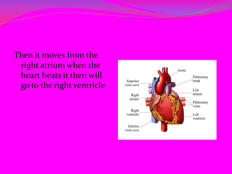 Then it moves from the right atrium when the heart beats it then will go to the right ventricle