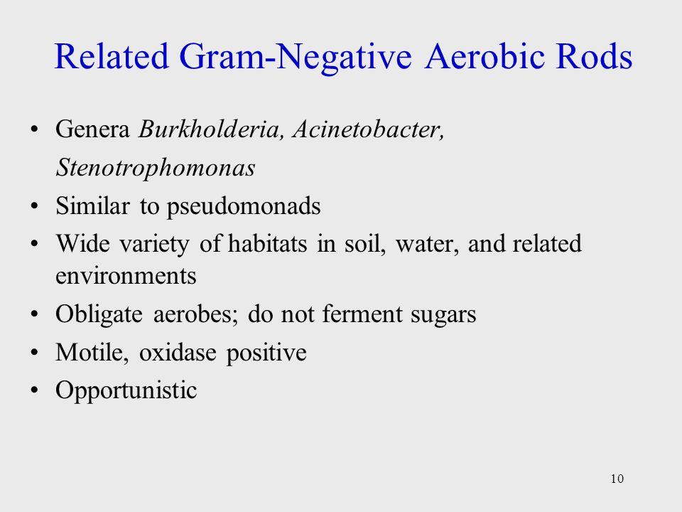 10 Related Gram-Negative Aerobic Rods Genera Burkholderia, Acinetobacter, Stenotrophomonas Similar to pseudomonads Wide variety of habitats in soil, w