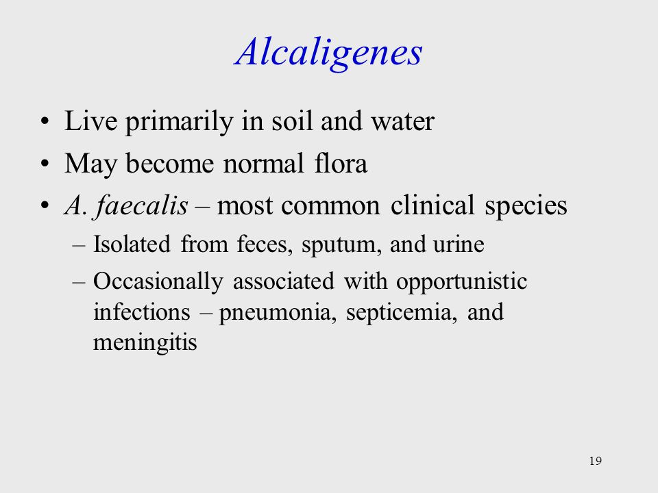 19 Alcaligenes Live primarily in soil and water May become normal flora A. faecalis – most common clinical species –Isolated from feces, sputum, and u