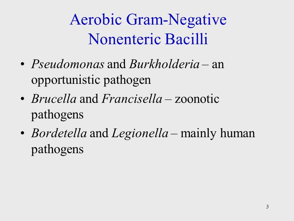 3 Aerobic Gram-Negative Nonenteric Bacilli Pseudomonas and Burkholderia – an opportunistic pathogen Brucella and Francisella – zoonotic pathogens Bord