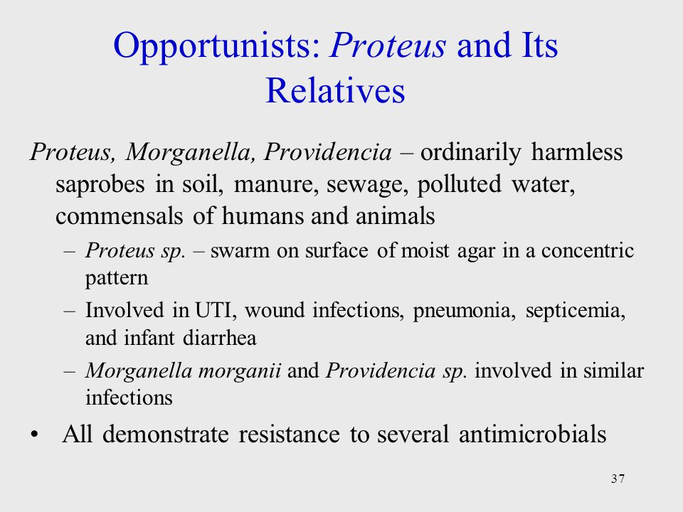 37 Opportunists: Proteus and Its Relatives Proteus, Morganella, Providencia – ordinarily harmless saprobes in soil, manure, sewage, polluted water, co