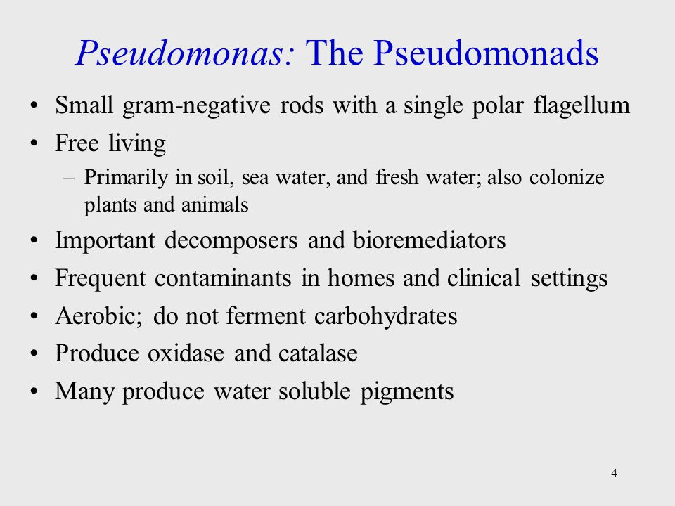 4 Pseudomonas: The Pseudomonads Small gram-negative rods with a single polar flagellum Free living –Primarily in soil, sea water, and fresh water; als