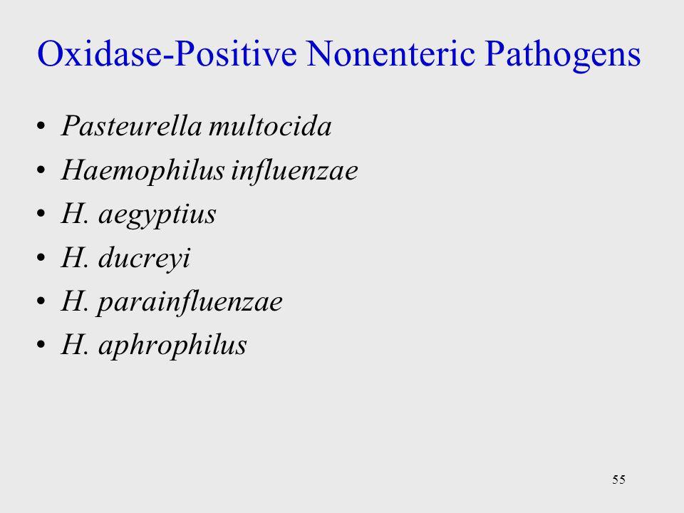 55 Oxidase-Positive Nonenteric Pathogens Pasteurella multocida Haemophilus influenzae H. aegyptius H. ducreyi H. parainfluenzae H. aphrophilus