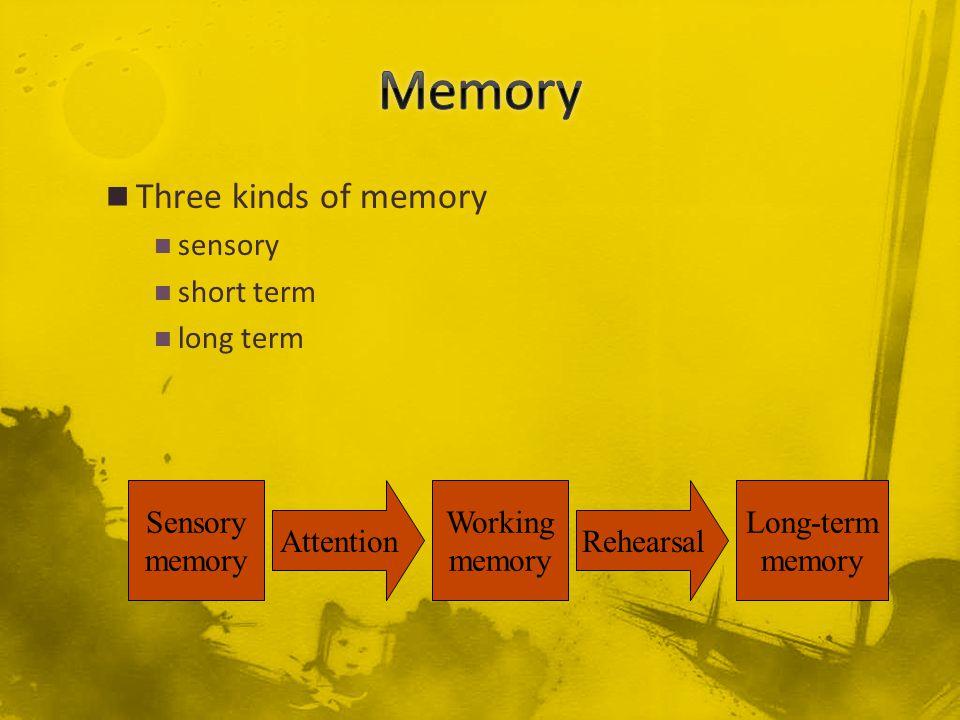 Three kinds of memory sensory short term long term Sensory memory Attention Working memory Rehearsal Long-term memory