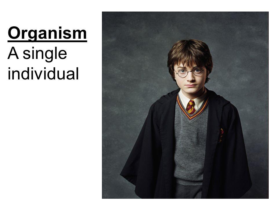 Organism A single individual