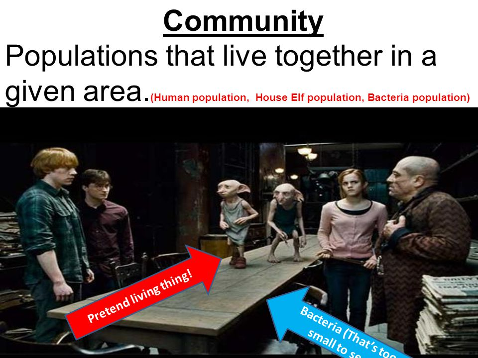 Community Populations that live together in a given area. (Human population, House Elf population, Bacteria population) Pretend living thing! Bacteria