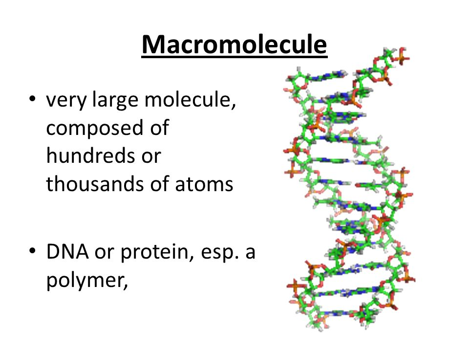 Macromolecule very large molecule, composed of hundreds or thousands of atoms DNA or protein, esp. a polymer,