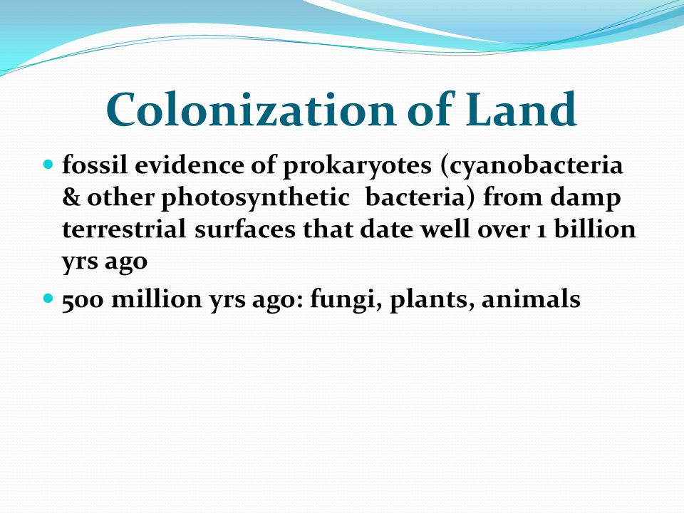 Colonization of Land fossil evidence of prokaryotes (cyanobacteria & other photosynthetic bacteria) from damp terrestrial surfaces that date well over