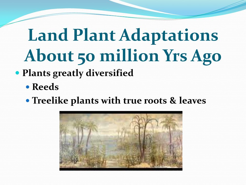 Land Plant Adaptations About 50 million Yrs Ago Plants greatly diversified Reeds Treelike plants with true roots & leaves