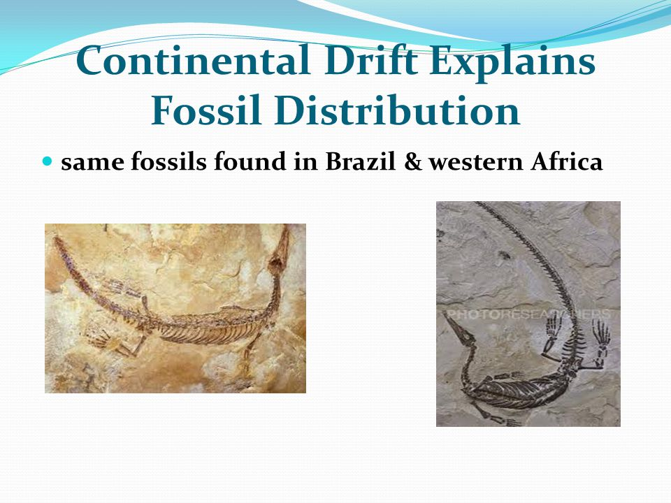 Continental Drift Explains Fossil Distribution same fossils found in Brazil & western Africa