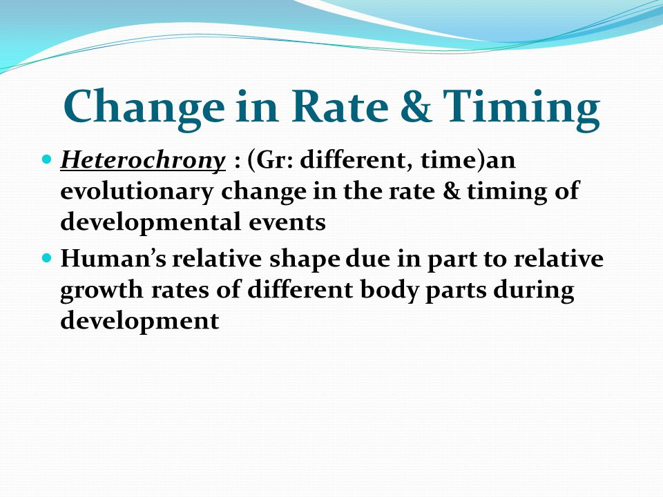 Change in Rate & Timing Heterochrony : (Gr: different, time)an evolutionary change in the rate & timing of developmental events Human's relative shape