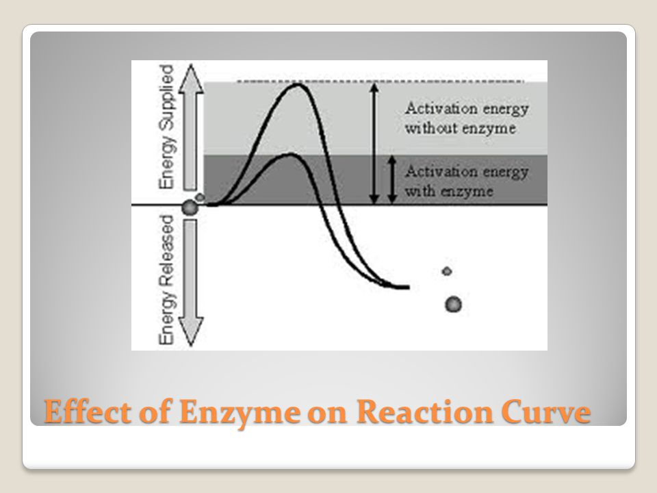 Effect of Enzyme on Reaction Curve