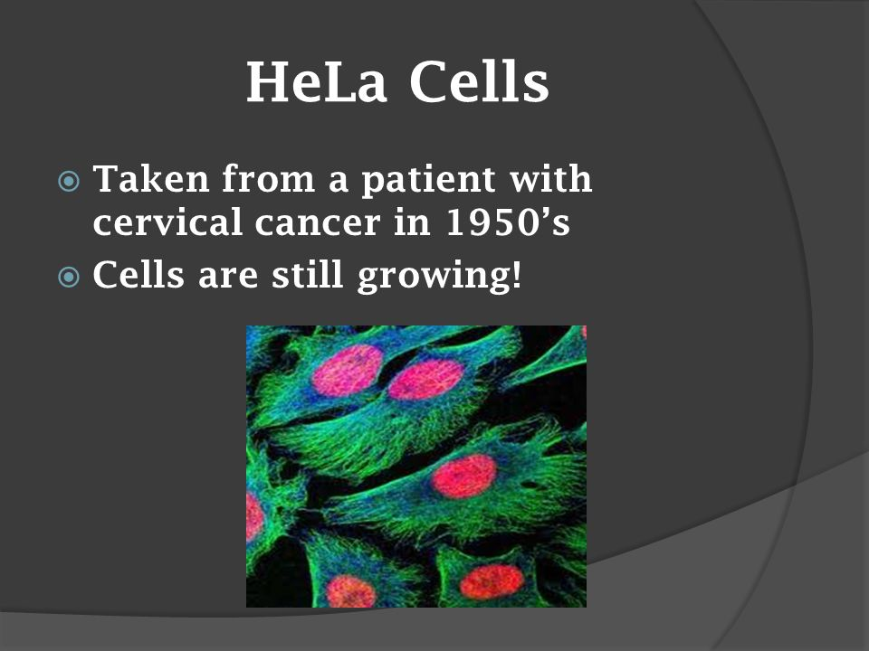 HeLa Cells  Taken from a patient with cervical cancer in 1950's  Cells are still growing!