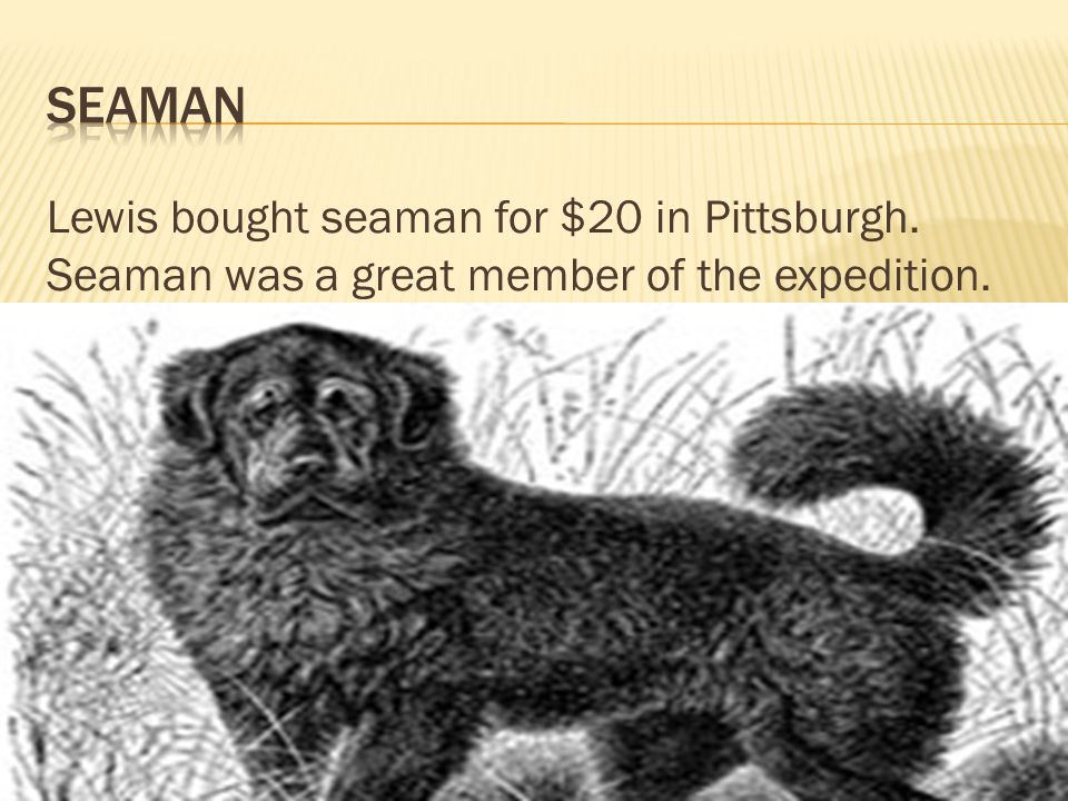 Lewis bought seaman for $20 in Pittsburgh. Seaman was a great member of the expedition.
