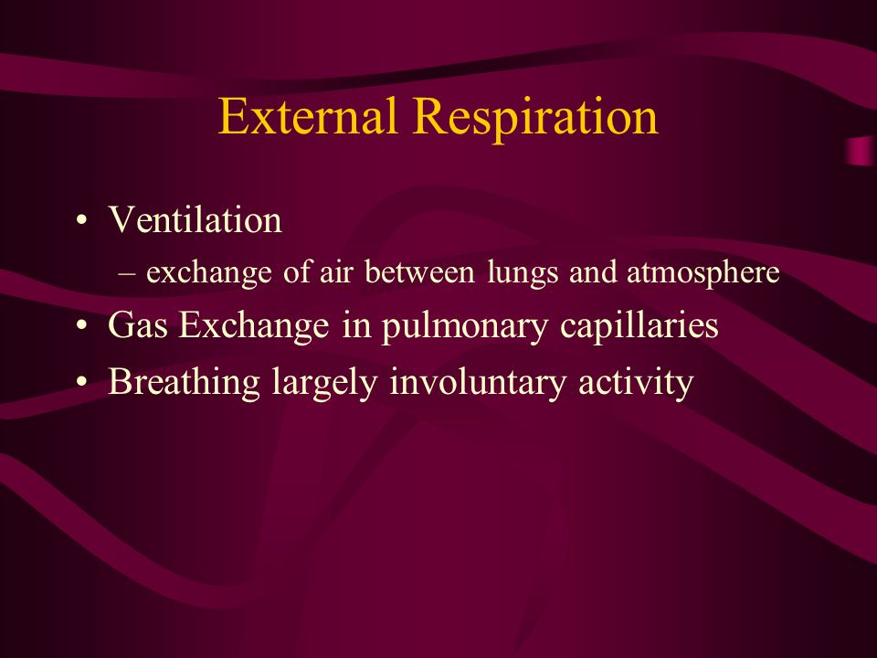 External Respiration Ventilation –exchange of air between lungs and atmosphere Gas Exchange in pulmonary capillaries Breathing largely involuntary act