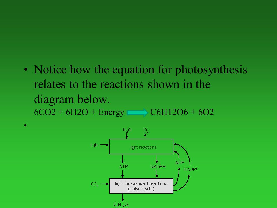 Notice how the equation for photosynthesis relates to the reactions shown in the diagram below.
