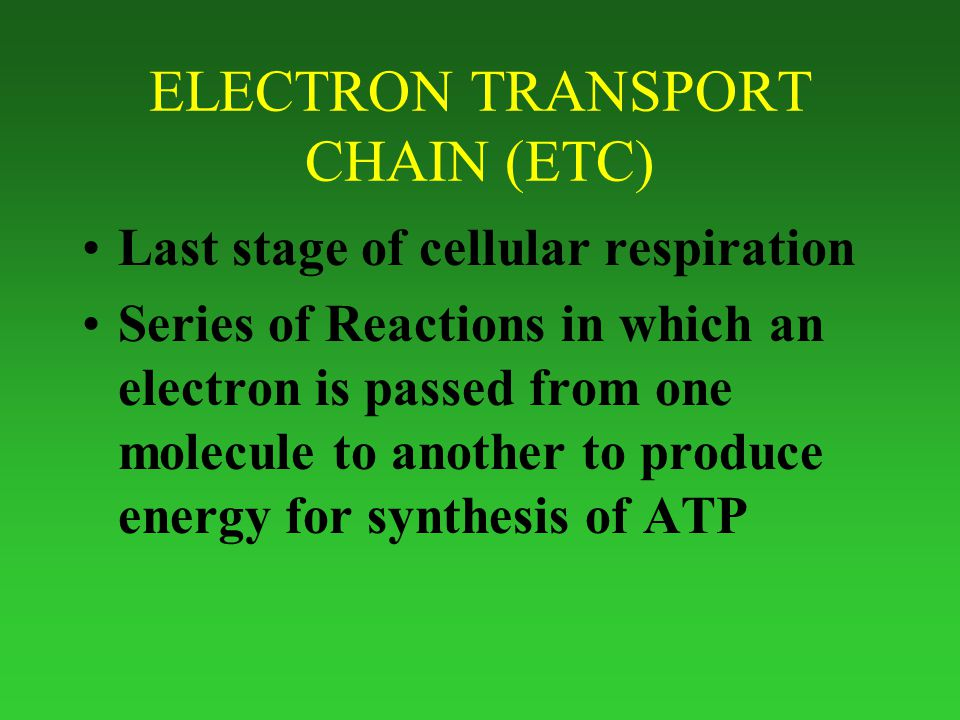 ELECTRON TRANSPORT CHAIN (ETC) Last stage of cellular respiration Series of Reactions in which an electron is passed from one molecule to another to produce energy for synthesis of ATP