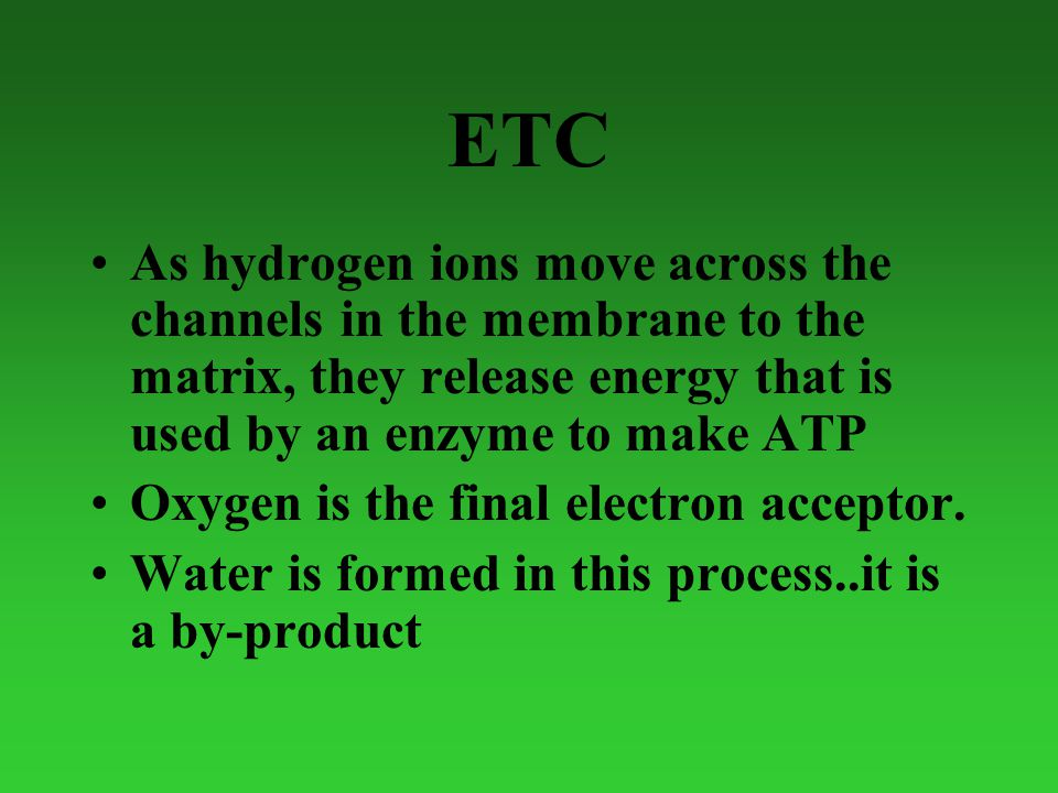 ETC As hydrogen ions move across the channels in the membrane to the matrix, they release energy that is used by an enzyme to make ATP Oxygen is the final electron acceptor.