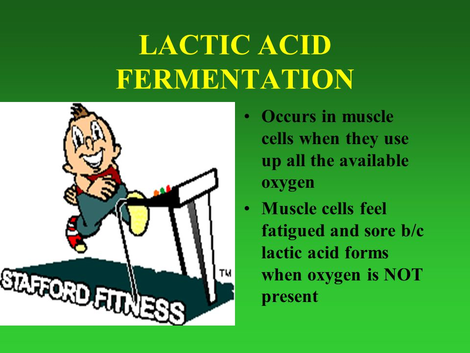 LACTIC ACID FERMENTATION Occurs in muscle cells when they use up all the available oxygen Muscle cells feel fatigued and sore b/c lactic acid forms when oxygen is NOT present