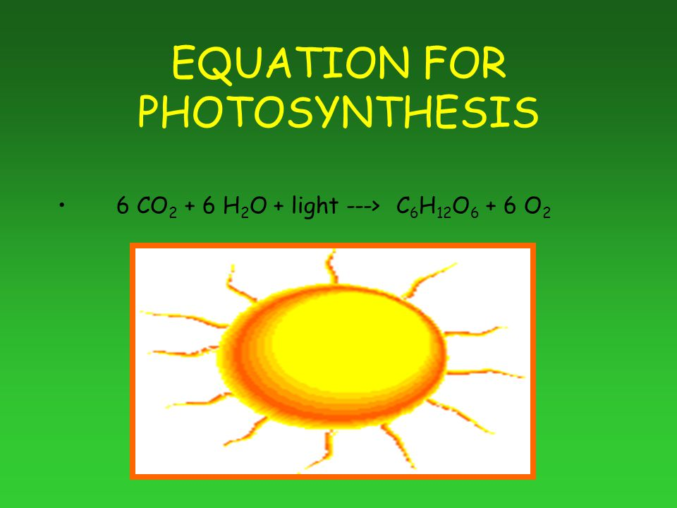 EQUATION FOR PHOTOSYNTHESIS 6 CO H 2 O + light ---> C 6 H 12 O O 2