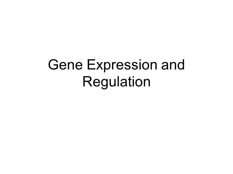 I.Gene Regulation in Eukaryotes A.Transcriptional Controls 1.