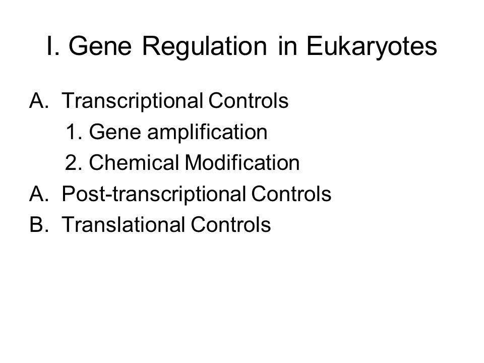 I. Gene Regulation in Eukaryotes A.Transcriptional Controls 1. Gene amplification 2. Chemical Modification A.Post-transcriptional Controls B.Translati