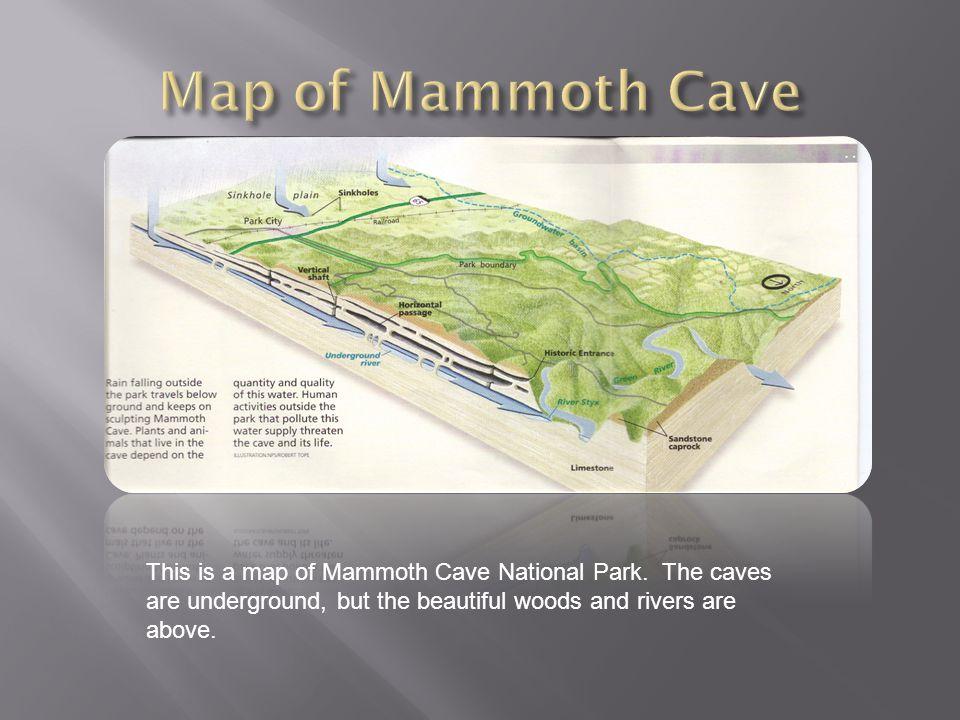  Graf, Mike.Mammoth Cave National Park. Mankato, Minn.: Bridgestone, 2004.
