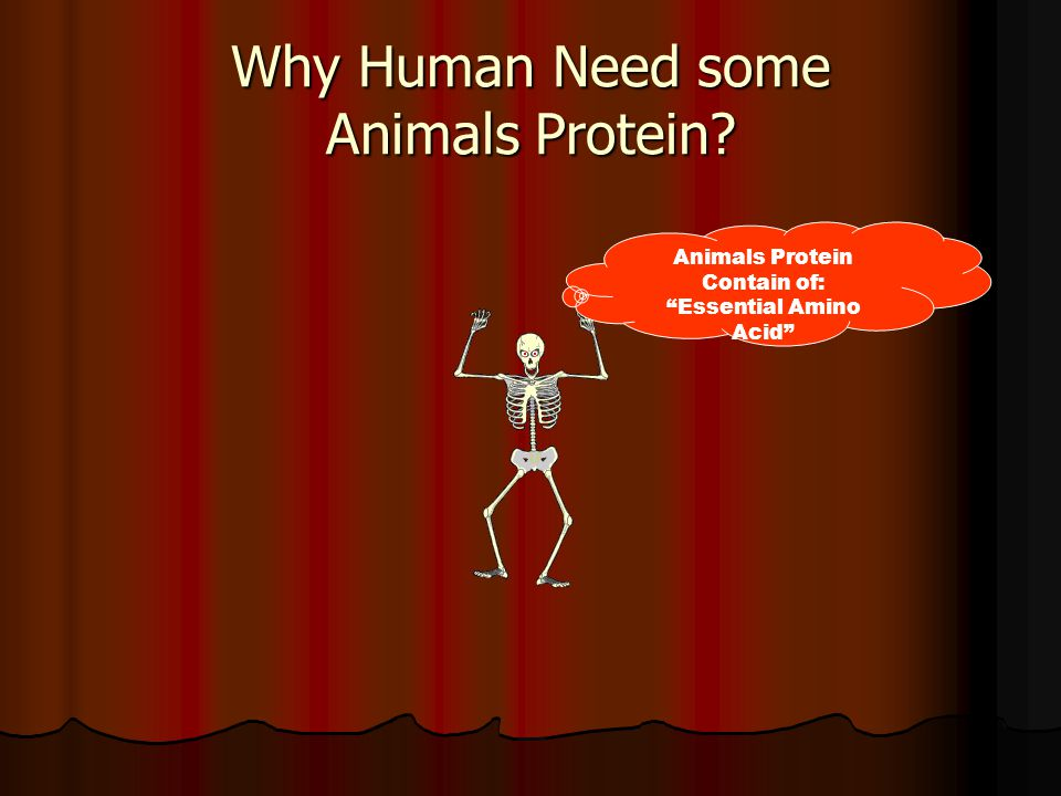 Why Human Need some Animals Protein Animals Protein Contain of: Essential Amino Acid