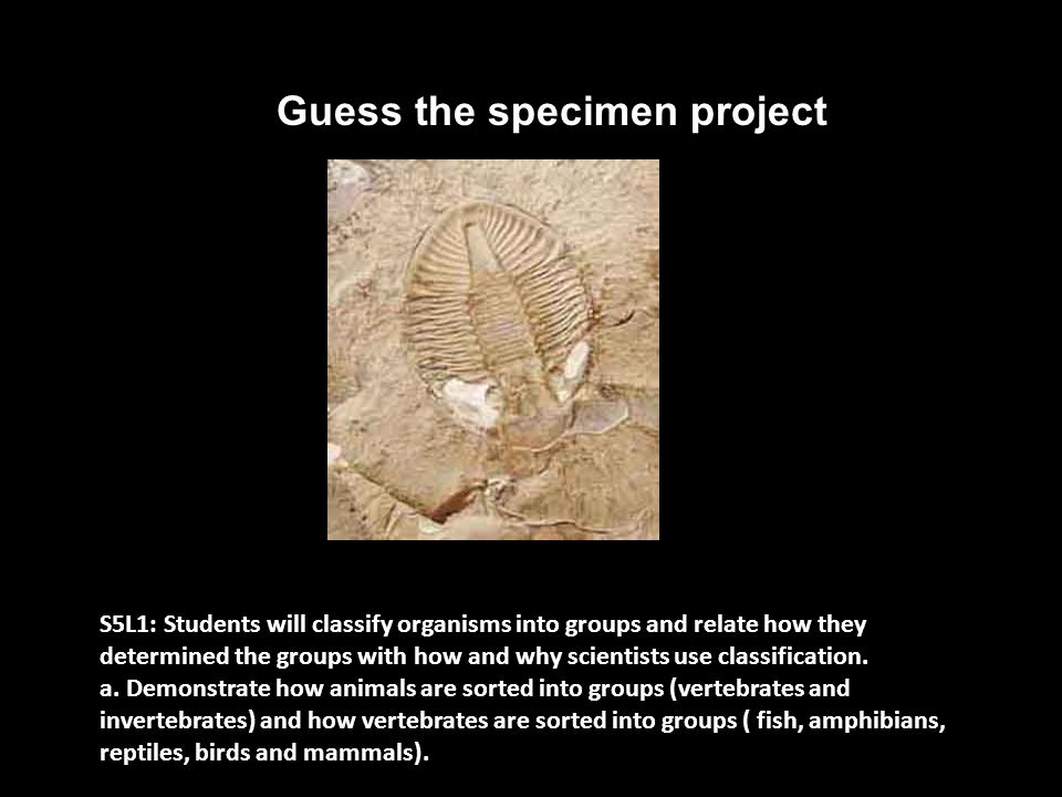 Guess the specimen project S5L1: Students will classify organisms into groups and relate how they determined the groups with how and why scientists use classification.