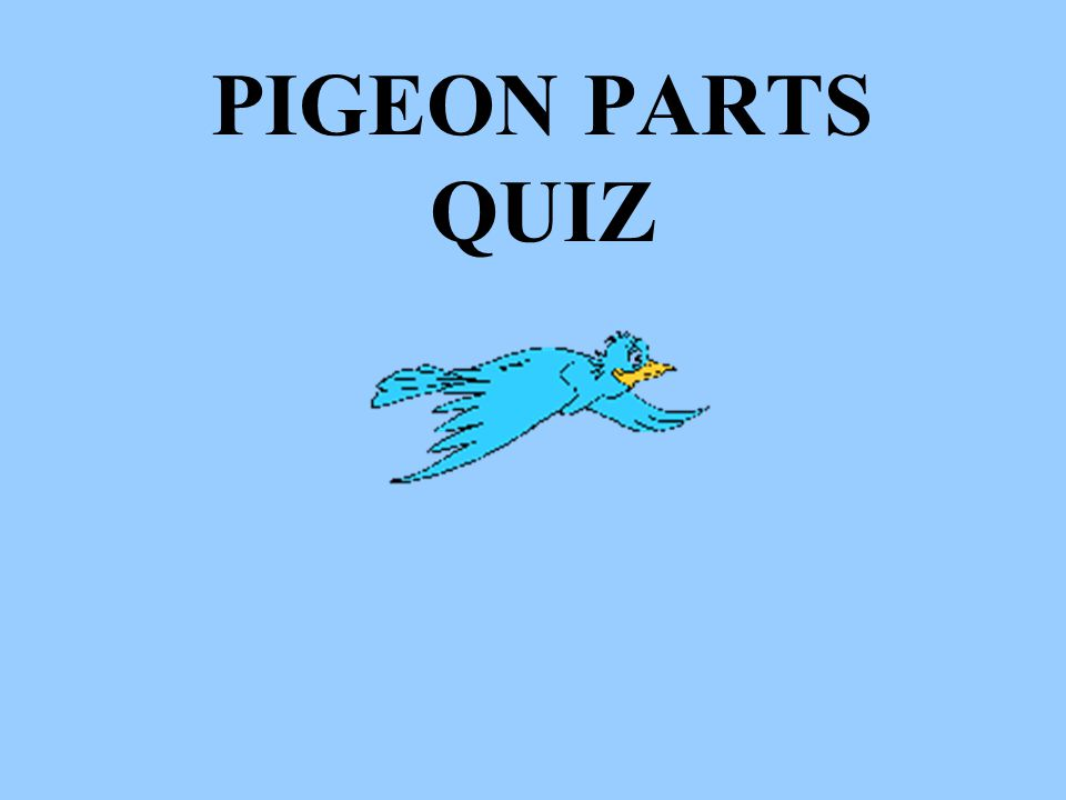 PIGEON PARTS QUIZ