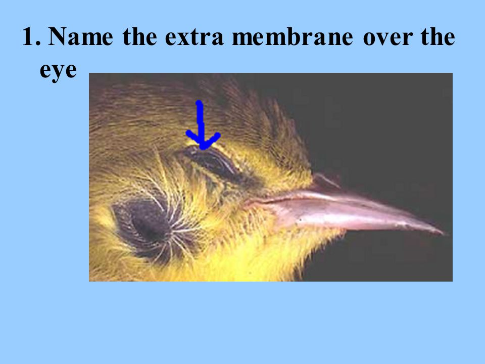 1. Name the extra membrane over the eye