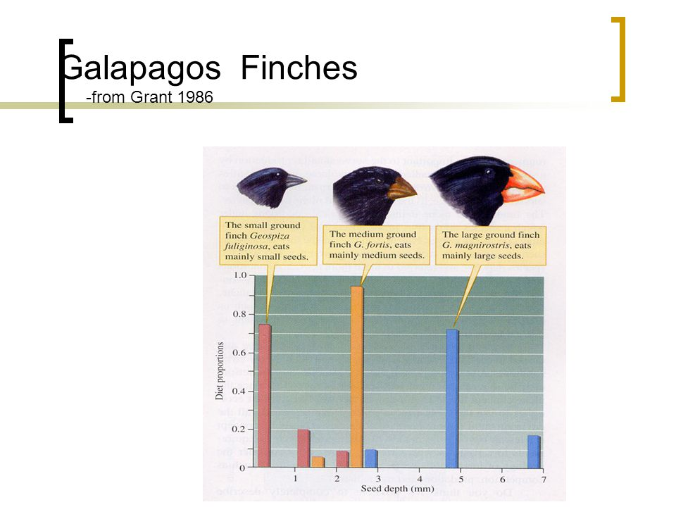 Galapagos Finches -from Grant 1986