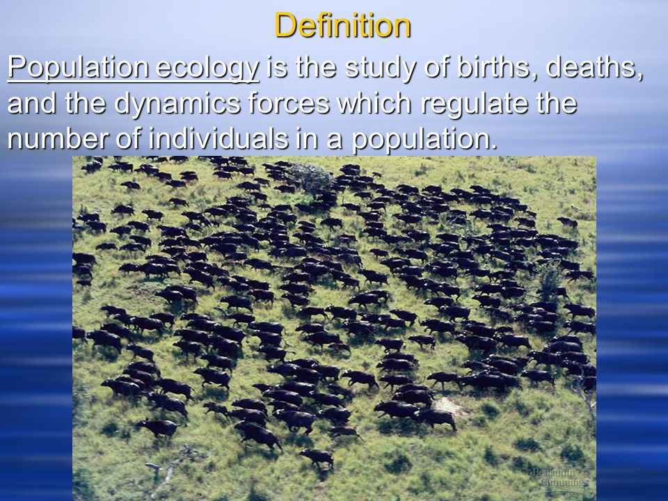 Definition Population ecology is the study of births, deaths, and the dynamics forces which regulate the number of individuals in a population.