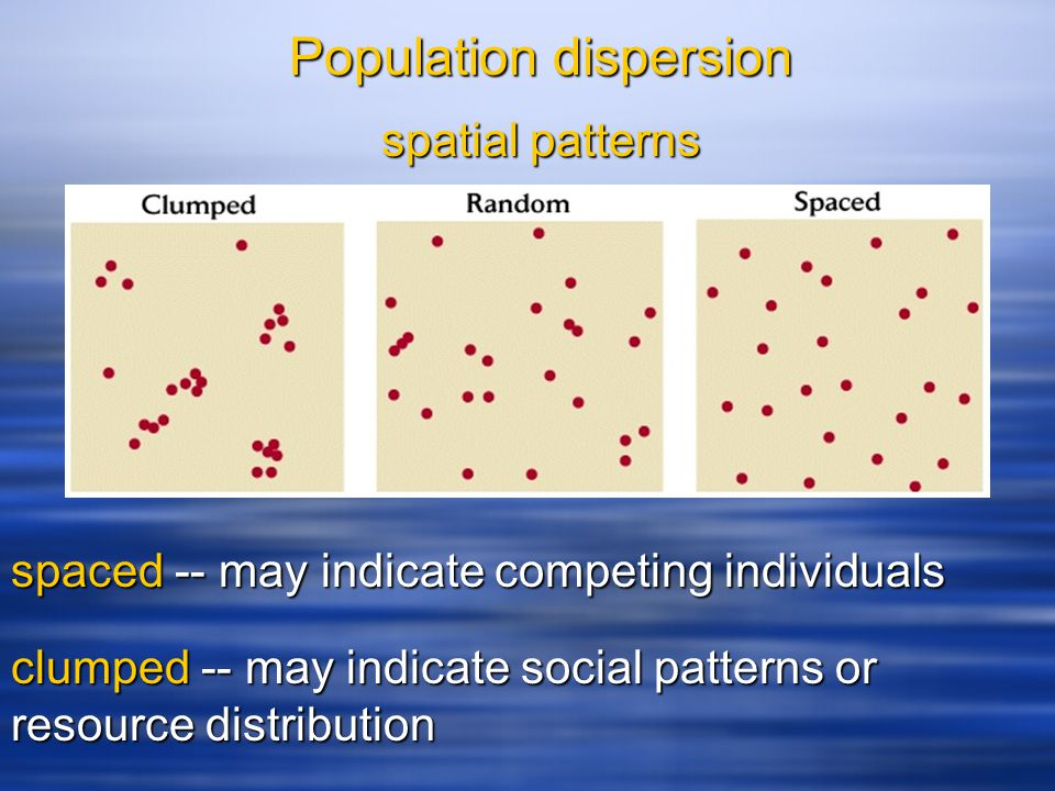 spatial patterns spaced-- may indicate competing individuals spaced -- may indicate competing individuals clumped-- may indicate social patterns or re