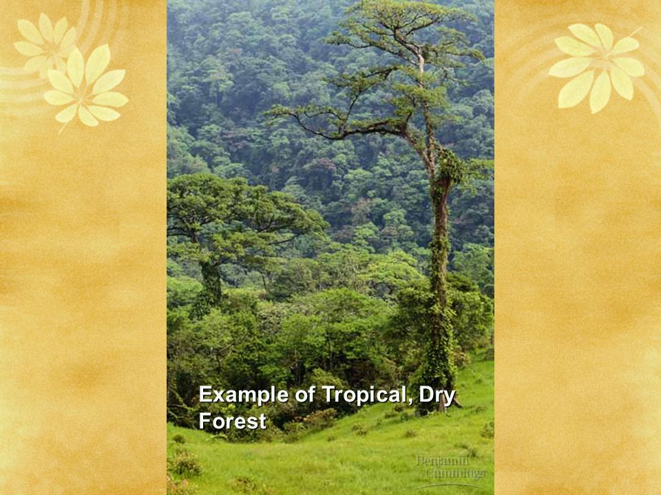 Example of Tropical, Dry Forest