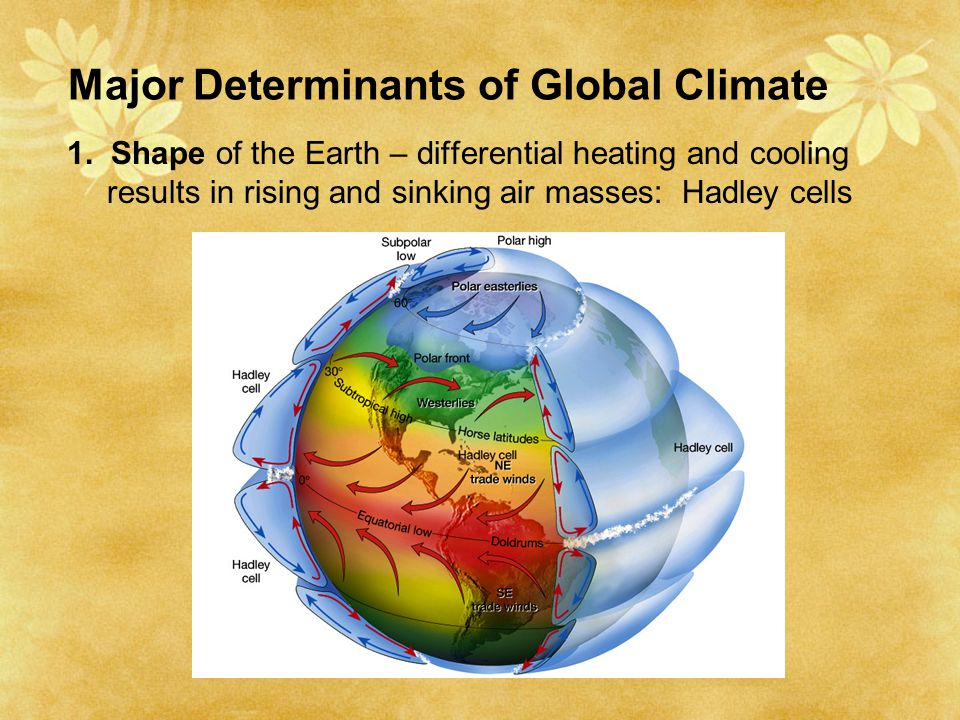 Major Determinants of Global Climate 1. Shape of the Earth – differential heating and cooling results in rising and sinking air masses: Hadley cells