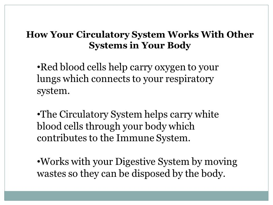 Fun Facts About Your Circulatory System.