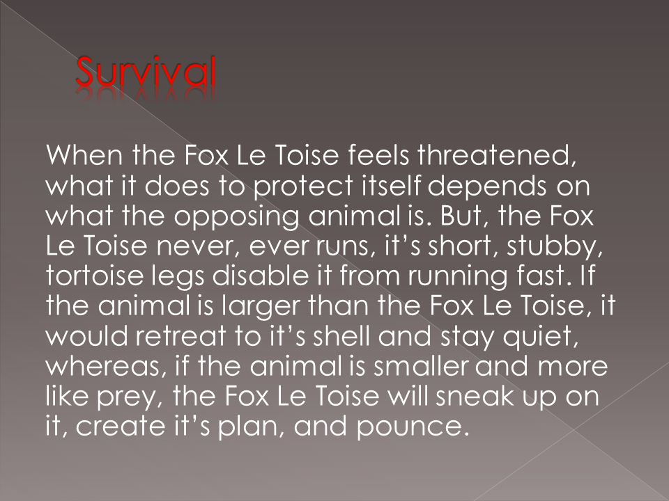 When the Fox Le Toise feels threatened, what it does to protect itself depends on what the opposing animal is.