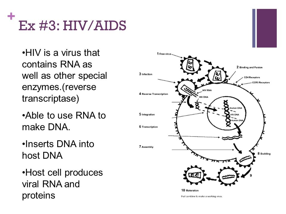 + Ex #3: HIV/AIDS HIV is a virus that contains RNA as well as other special enzymes.(reverse transcriptase) Able to use RNA to make DNA.
