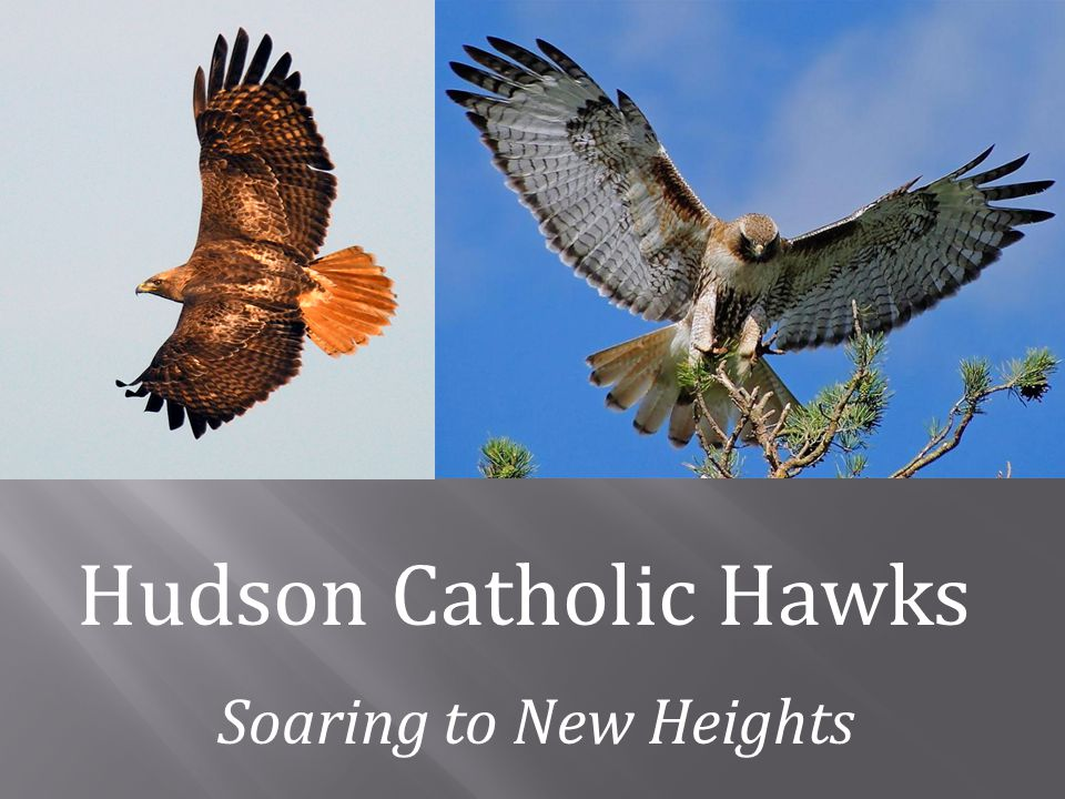 Hudson Catholic Hawks Soaring to New Heights