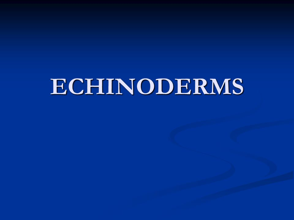 ECHINODERMS Means spiny skin Means spiny skin