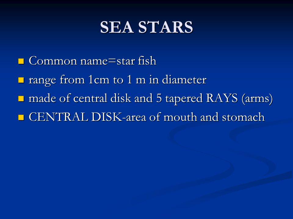 SEA STARS Common name=star fish Common name=star fish range from 1cm to 1 m in diameter range from 1cm to 1 m in diameter made of central disk and 5 t