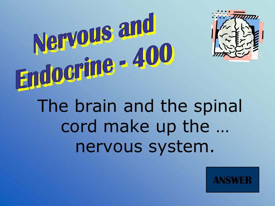 Nerve cells are also known as … ANSWER